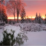 Dawn_in_snow