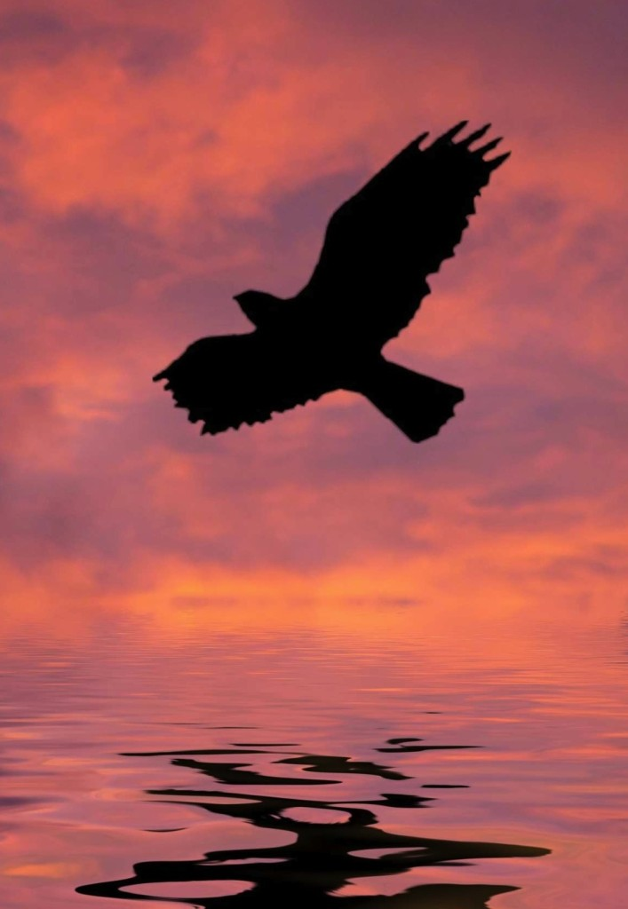Crow Deadly Sky
